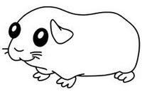 荷兰猪简笔画图片大全、画法