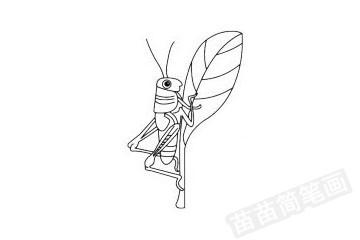 蝗虫简笔画图片大全作品四