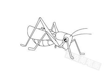蝗虫简笔画图片大全作品五
