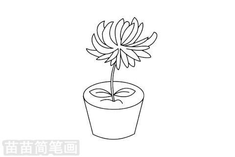 简笔画 风景简笔画 植物花卉简笔画 >> 正文内容   菊花简笔画分步骤