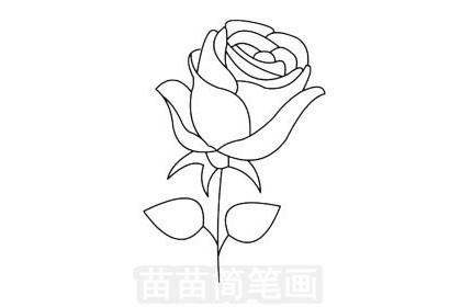 玫瑰花简笔画图片大全作品一