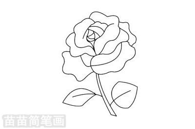 玫瑰花简笔画图片大全,教程