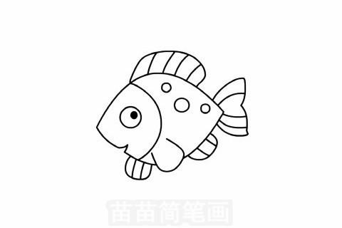 简笔画 动物简笔画 海洋动物简笔画 >> 正文内容   热带鱼简笔画分