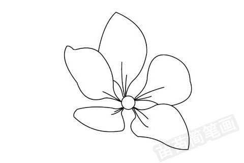 简笔画 风景简笔画 植物花卉简笔画 >> 正文内容   桃花小知识:桃花茶