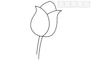 郁金香简笔画图片步骤四