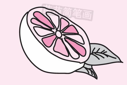 橘子简笔画图片大全 教程