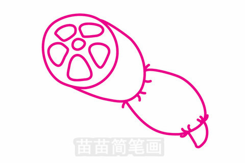 莲藕简笔画大图