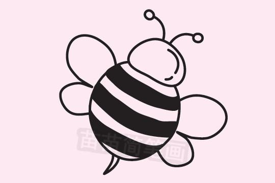 蜜蜂简笔画图片大全 教程