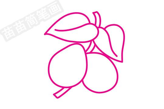 枇杷简笔画图片步骤四