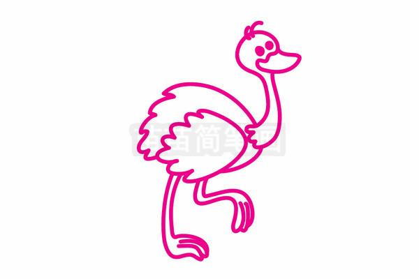 鸵鸟简笔画图片步骤五