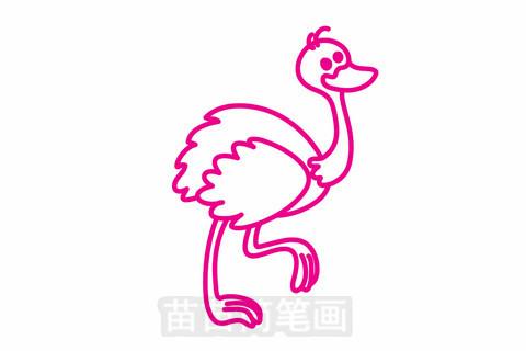 鸵鸟简笔画大图