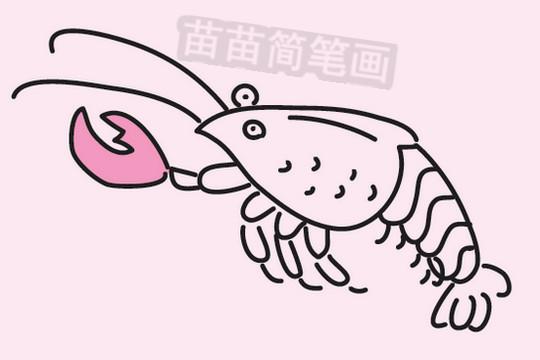 简笔画 动物简笔画 海洋动物简笔画 >> 正文内容   虾小知识:尾肢与