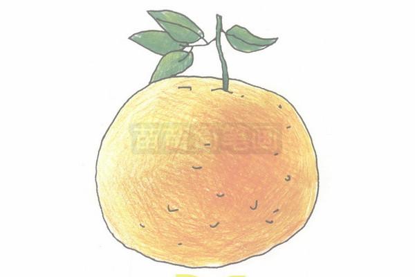 橘子简笔画图片步骤四