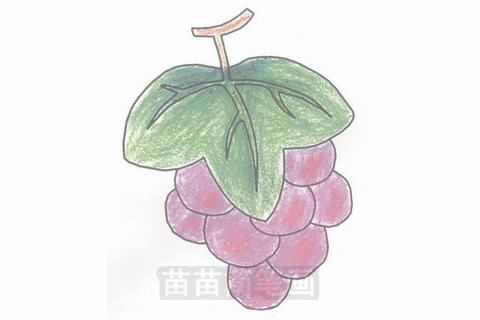 葡萄简笔画大图