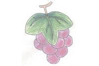 葡萄简笔画简单画法