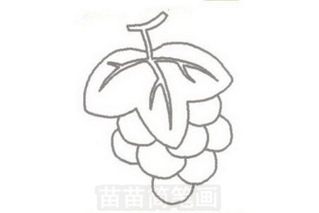 葡萄简笔画图片步骤三