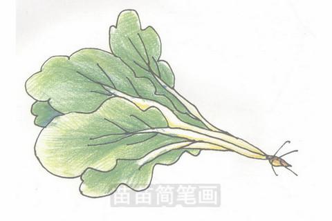 青菜简笔画大图