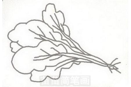青菜简笔画图片步骤三