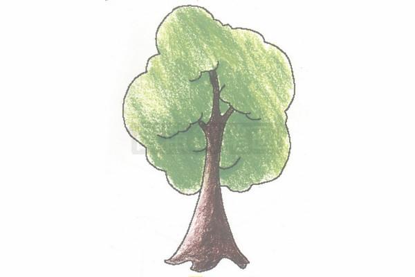 小树简笔画图片步骤四