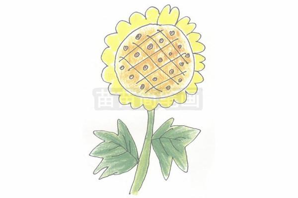画太阳花的步骤