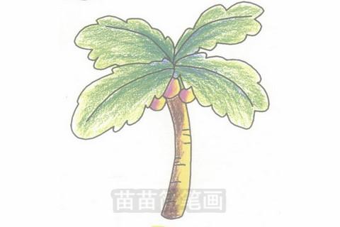椰子树简笔画大图