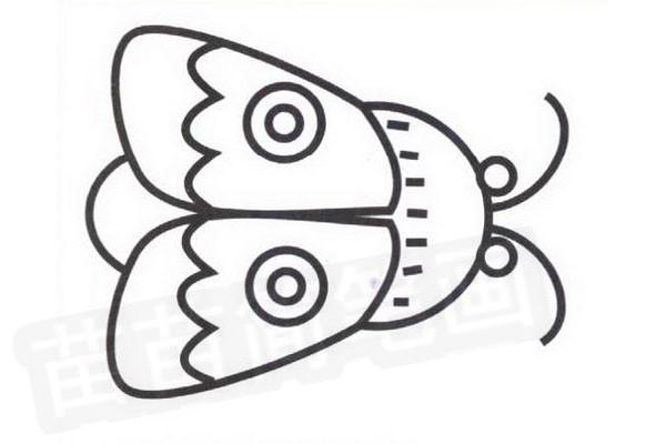"""步骤五:涂上颜色的飞蛾简笔画更漂亮了,如上图。 飞蛾小知识:飞蛾是完全变态昆虫,它一生要经过卵、幼虫、蛹和成虫四个发育阶段。幼虫在形态结构和生活习性上与成虫完全不同。除少数种类成虫吸食果汁外,大部分成虫并不危害农作物,幼虫则大部分危害农作物、果树、林木。因此,人们就利用飞蛾的""""化学通讯""""特点,分离和测定了许多飞蛾类害虫性外激素的结构,并进行人工合成,用来诱杀雄性飞蛾,以达到生物防治的目的。飞蛾是蝴蝶的姊妹,属鳞翅目,异脉亚目。飞蛾虽则没有蝴蝶漂亮,但它们的繁殖方式却差不多。在雌蛾体上长有一种特殊的化"""