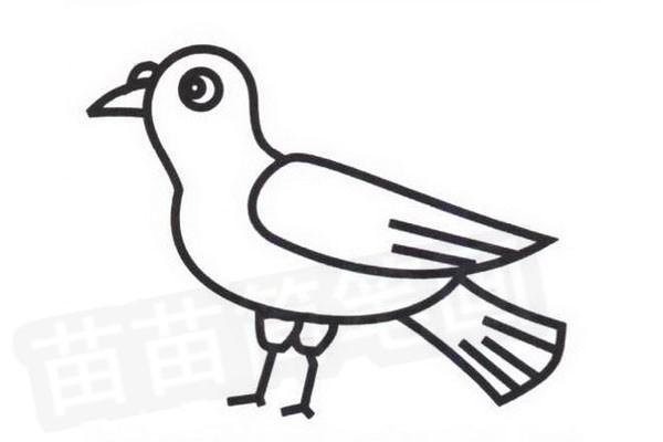 鸽子简笔画怎么画