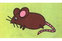老鼠简笔画步骤分解彩色教程