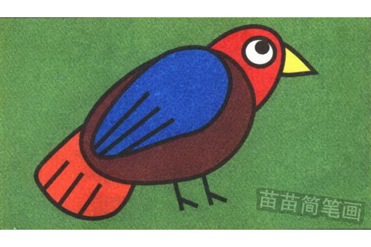 知更鸟彩色简笔画图片