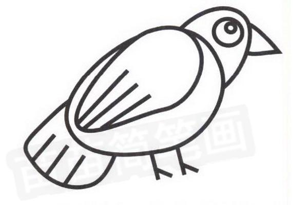 知更鸟简笔画怎么画步骤四