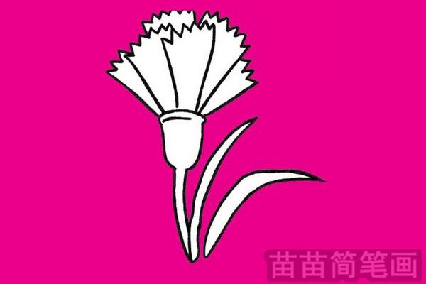 康乃馨小知识:康乃馨又名香石竹,属石竹科石竹属多年生草本植物.康乃馨以其花朵绮丽、高雅,花色丰富,单朵花期长,装饰效果好,在插花、花束、花篮、花环中都被广泛应用,是世界上最大众化的切花.康乃馨喜空气干燥、通风良好、日照充足的环境,忌高温多湿,   步骤一: