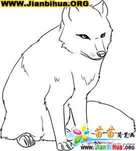 如何画北极狐简笔画教程图片5张第5张