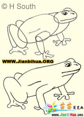 画青蛙——加菲的吃货生活