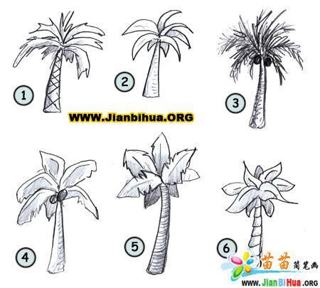 如何画椰子树简笔画图片教程