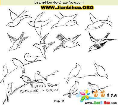 如何画鸟简笔画图片教程