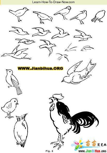 网站首页-- 小学生画鸟的图画