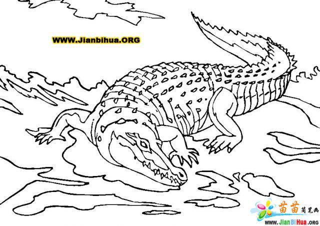 如何画鳄鱼简笔画图片教程(第8张)
