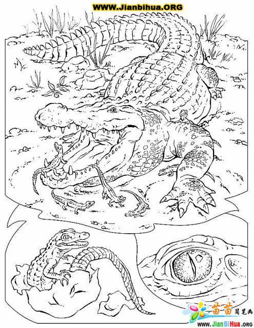 如何画鳄鱼简笔画图片教程 第8张