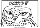 鸟类涂色卡图片9张
