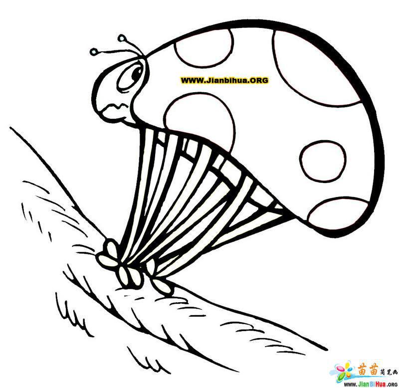 蜗牛的蘑菇简笔画图片