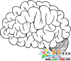 大脑简笔画图片