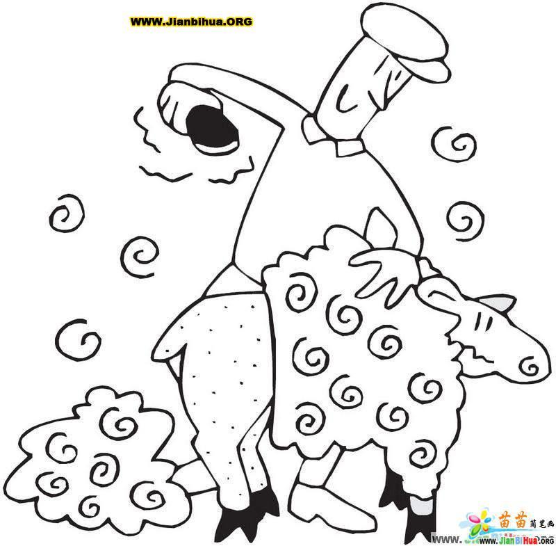 剪羊毛的简笔画图片