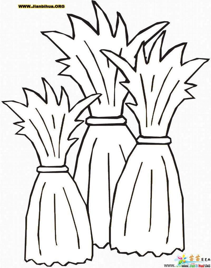 稻草捆简笔画画法3张