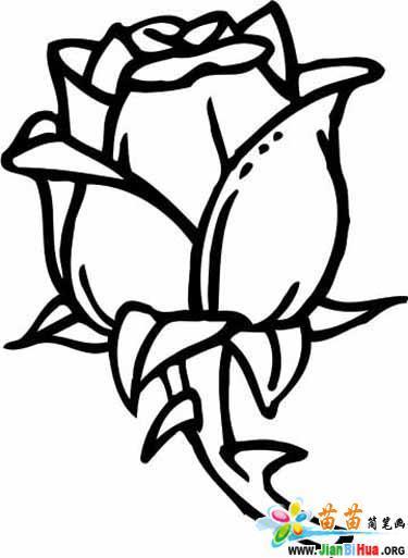 15张玫瑰花涂色卡图片