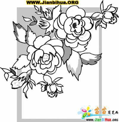 玫瑰花 素描 简笔画展示