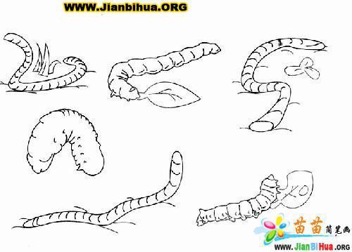 昆虫简笔画图片大全(第2张)