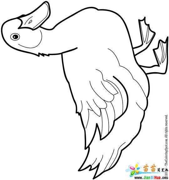 小鸭子简笔画 鸭子浮在水面的原因 小鸭子简笔画